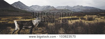Deer Beautiful Nature Scenic Animal Wildlife Rural Concept