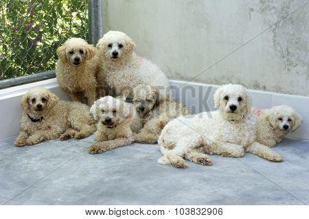 Shelter Dogs Adoption