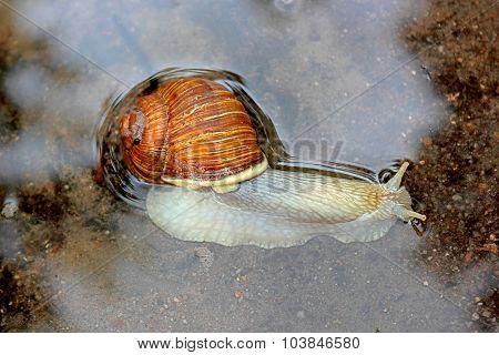 Floating snail.