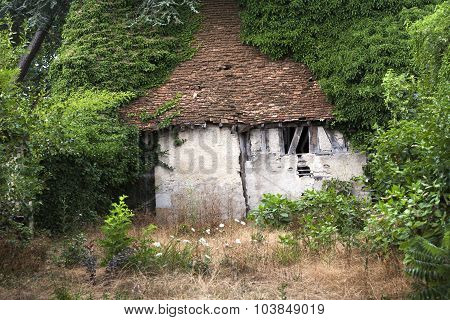 Old Abandoned Shack Overgrown By Trees