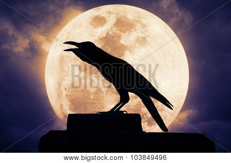 Crow Sitting On The Rock And Croaks Against Full Moon