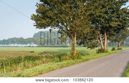 Country Road With Trees In Early Morning Sunlight