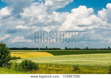 Yellow-green field under the beautiful clouds