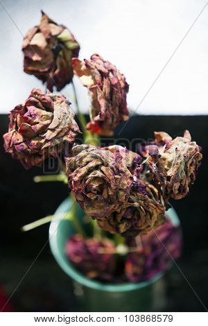 Dead Moldy Roses In A Green Vase And Some  Copy Space