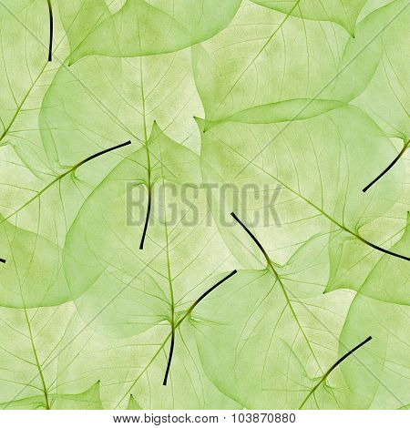 light leaves skeletons seamless background