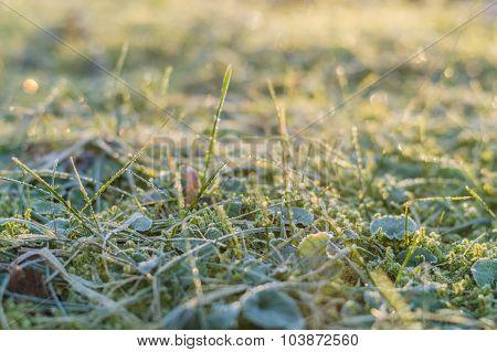 Frozen Grass And Moss On Autumn Morning, Shallow Depth Of Field