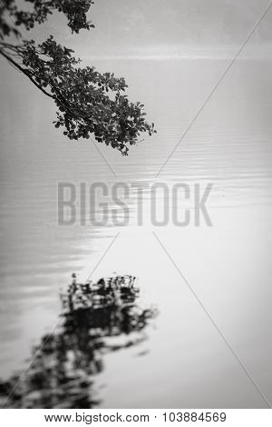 Reflection of a branch on a tranquil lake, art photo, black and white