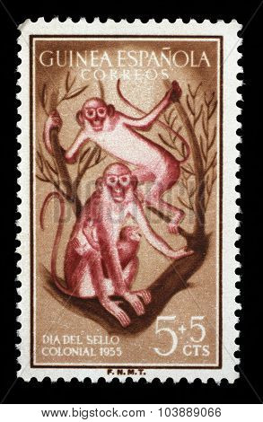 SPANISH GUINEA - CIRCA 1955: a stamp printed in Spanish Guinea shows Monkeys, Day of the stamp, circa 1955.