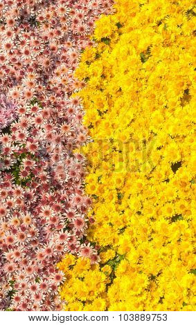 floral background at botanical garden