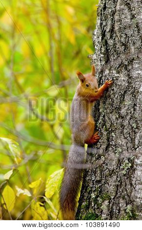 Squirrel Sitting On The Bank