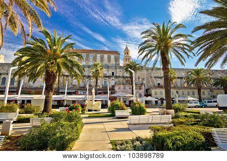 Split Riva Palm Waterfront View