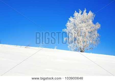 Winter Landscape With A One Tree And The Blue Sky