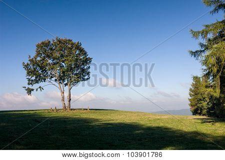 Tree On Horizon Against Blue Sky