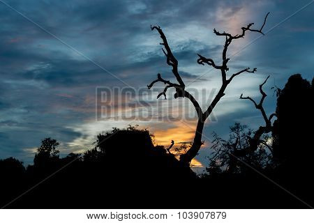 Silhouettes of scare Tree with sunset background