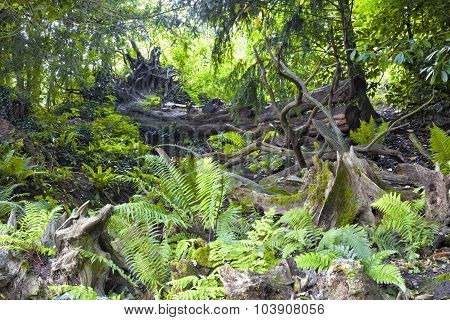 Fallen old trees rotting tree logs green moss and fern brown leaves in a bio diverse forest