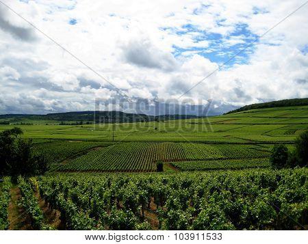 Burgundy landscape (France)