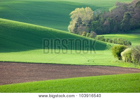 Abstract landscape of Sunny hills with green fields and blossom trees - backgrounds or wallpapers. Southern Moravia, Czech republic