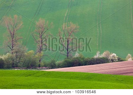 Spring landscape of fields and blossom trees - abstract background