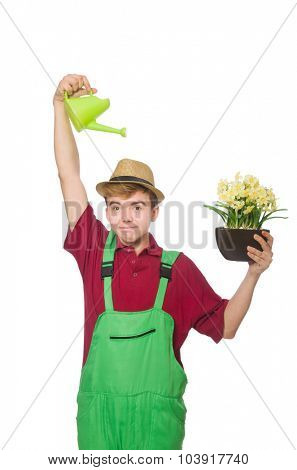 Young gardener with flower and pot isolated on white