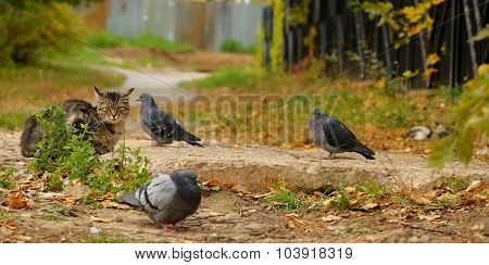 Cat And Doves