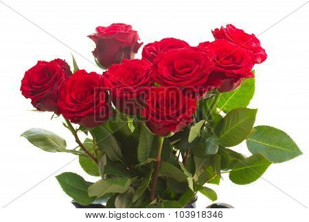 red roses in blue pot