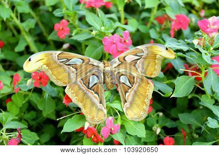 Colorful butterfly  on nature background