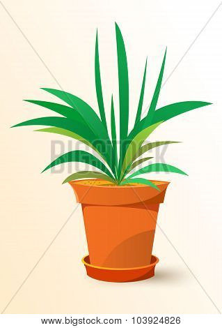 green Chlorophytum plant in a pot