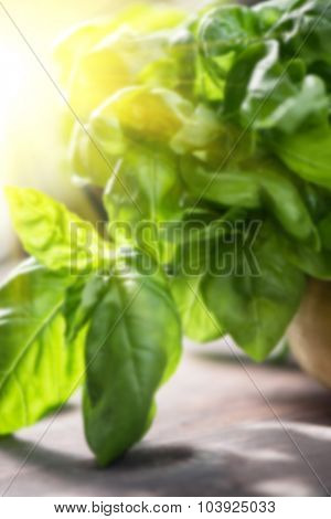Blurred background of fresh organic basil leaves on a wooden table