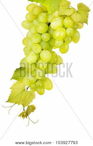 White grape isolated