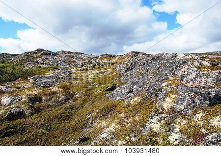 Tundra Vegetation Landscape In Summer