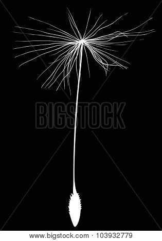 illustration with single dandelion seed silhouette isolated on black background