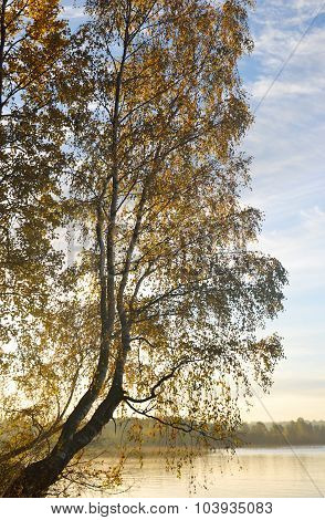 Birch Tree On The Lake At Sunrise.