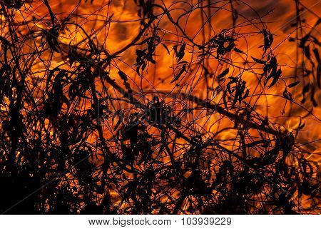 Wild Fire And Leaves