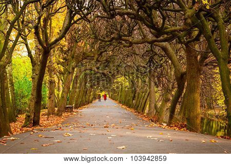 Autumn in the park in Gdansk, Poland