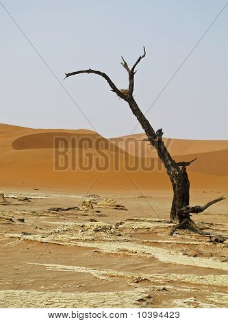 Sand Dune in Namib-Nauktuft National Park Namibia