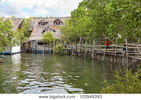 Mangrove Swamp Home