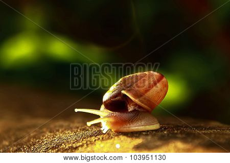 Snail Walking Alone On The Concrete Floor With The Light Effect From Sun Light In The Morning