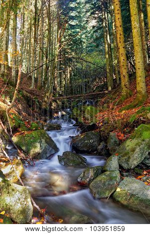 Forest With Stream