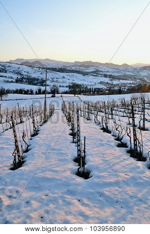 Vineyard With Snow