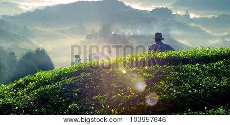 Farmer at Tea Plantation in Malaysia Concept