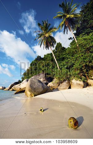 Malaysian Beach Coconut Palm Tree Travel Vacation Concept