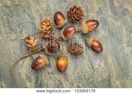 acorn and cone fall decoration on a slate stone background