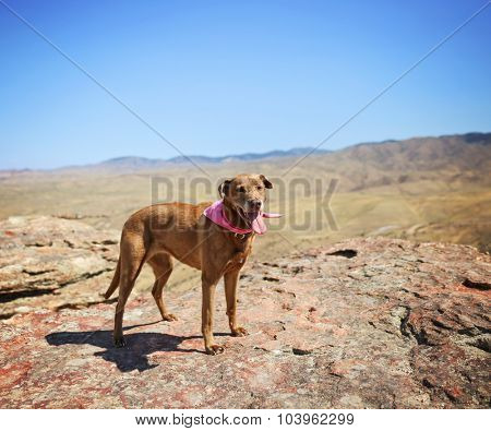 a dog sitting on a mountain top looking at the camera on a hot summer day