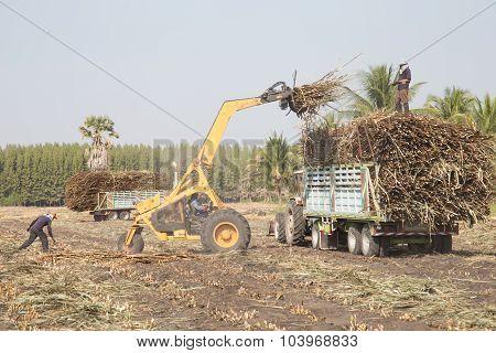 Sugarcane Truck