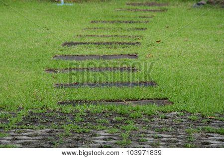 Walk Way On Green Grass Turf Floor Texture Background