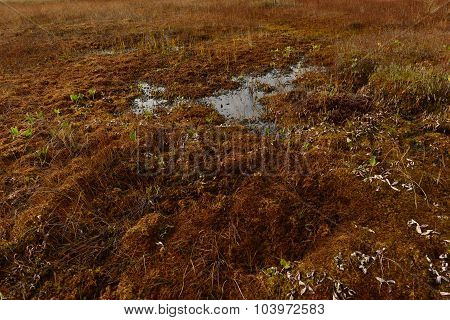 Cover Red Yellow Moss On A Forest Swamp