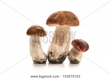 Porcini mushrooms isolated on white background