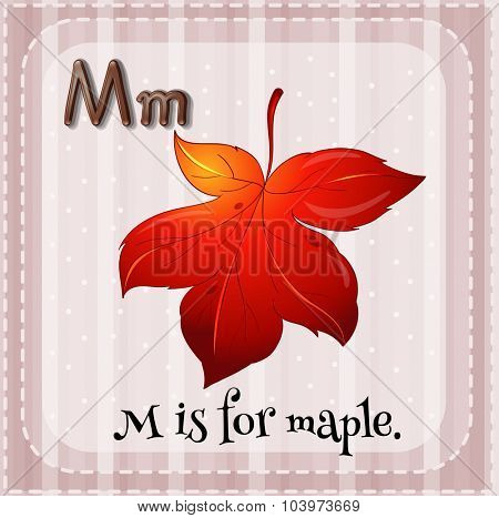Alphabet M is for maple illustration