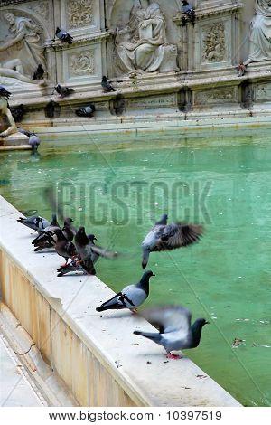 Pidgeons Going Airborne