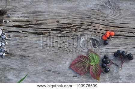 Leaves and Berries on Old Board
